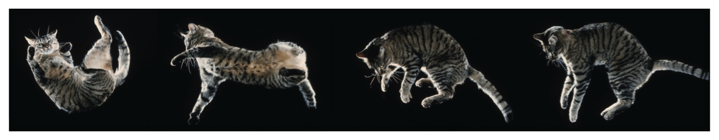 Flippin' felines: controlling a cat model to land on its feet.